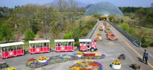 大好評♪LeT's花回廊でお散歩コン!! @ とっとり花回廊